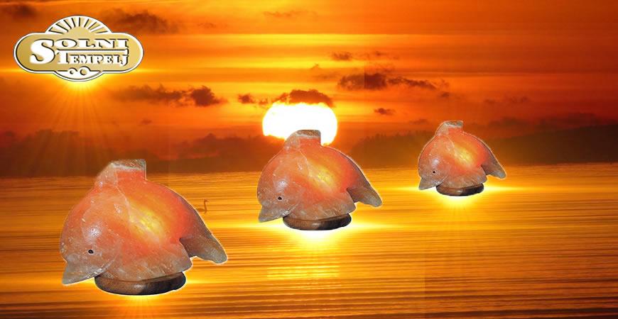 Akcija za tople dni delfinček