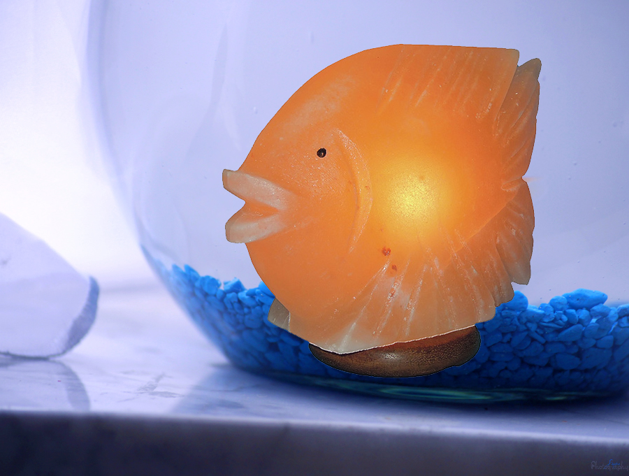 Zlata Solna ribica lučka meseca decembra
