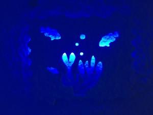 Korala-modra  Šentilj